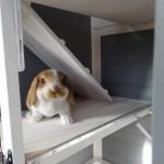 Cage à lapin en bois Beau