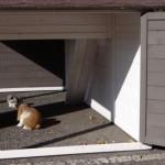 Grand clapier Annemieke XL avec enclos pour lapins ou cobayes