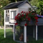 Poulailler Sunshine pour votre jardin