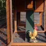 Poulailler Prestige Medium en bois