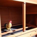 Poulailler en bois avec des perches